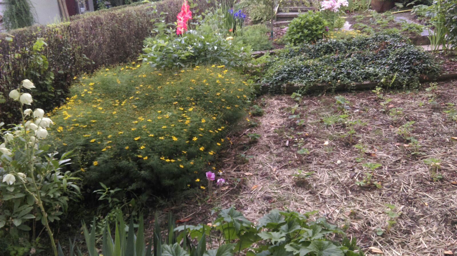 Erster Augenschein vom Garten